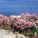 Baltic Sea Ecosystems